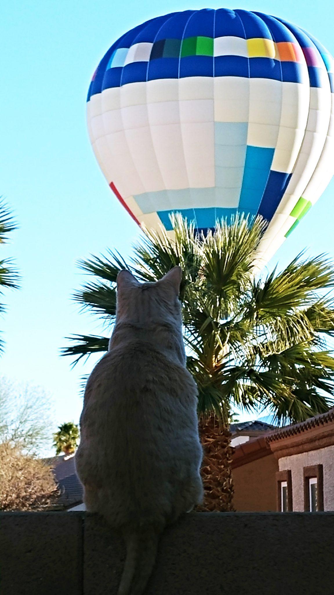 Mesquite Balloon Festival Pictures