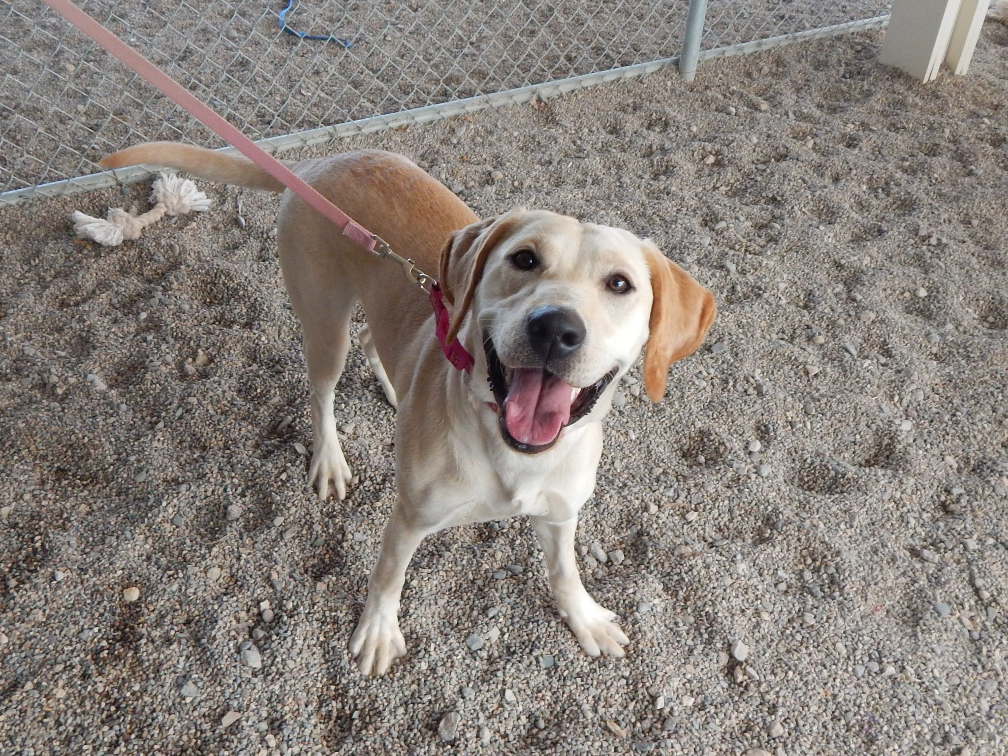 Mesquite Animal Shelter Pet Listing March 17, 2018