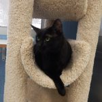 Mesquite Animal Shelter Pet Listing March 2, 2018