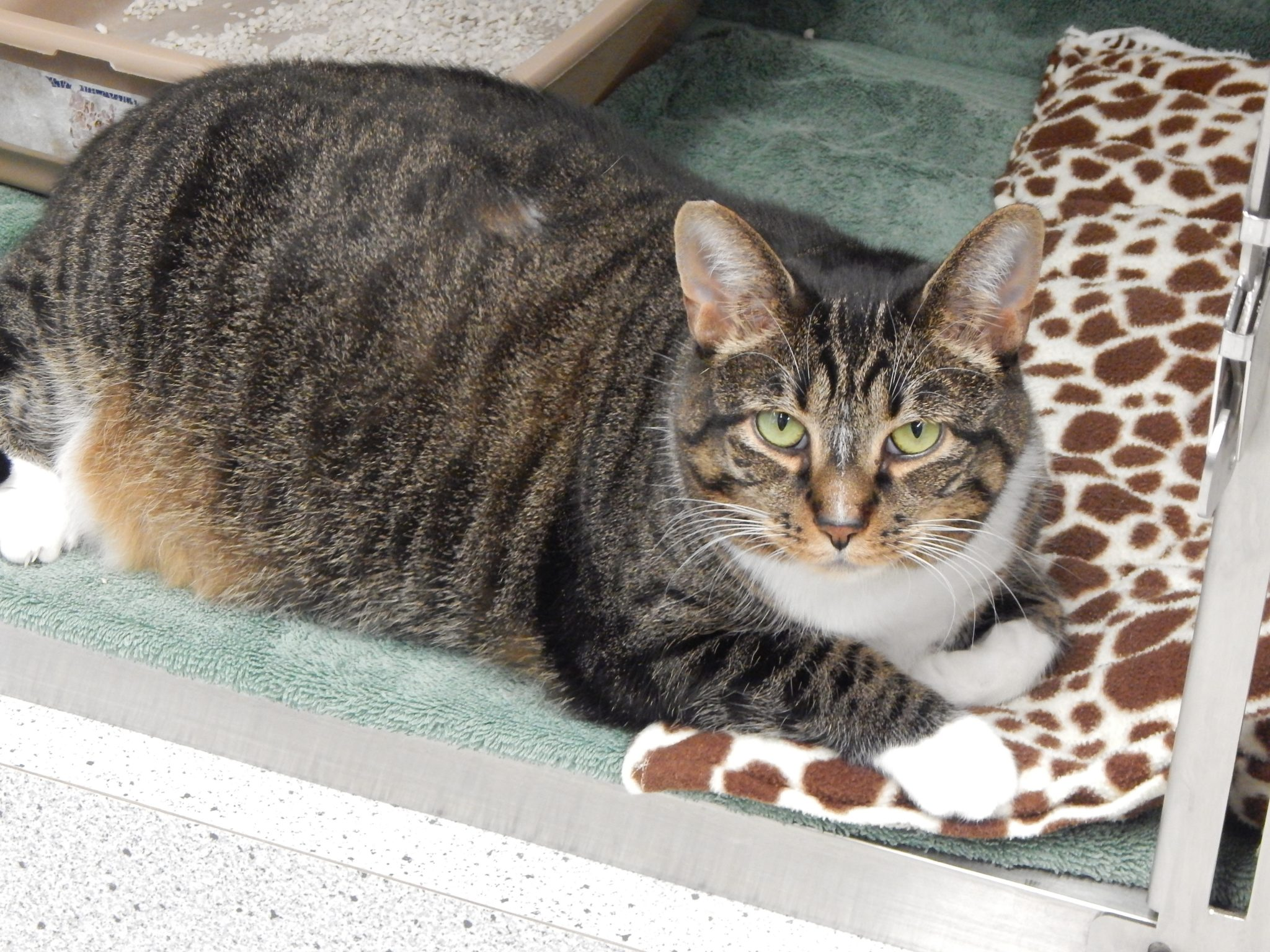 Mesquite Animal Shelter Pet Listing April 27, 2018