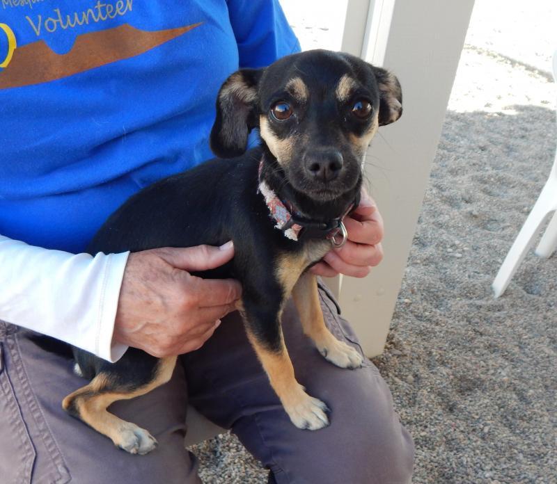 Mesquite Animal Shelter Pet Listing April 6, 2018