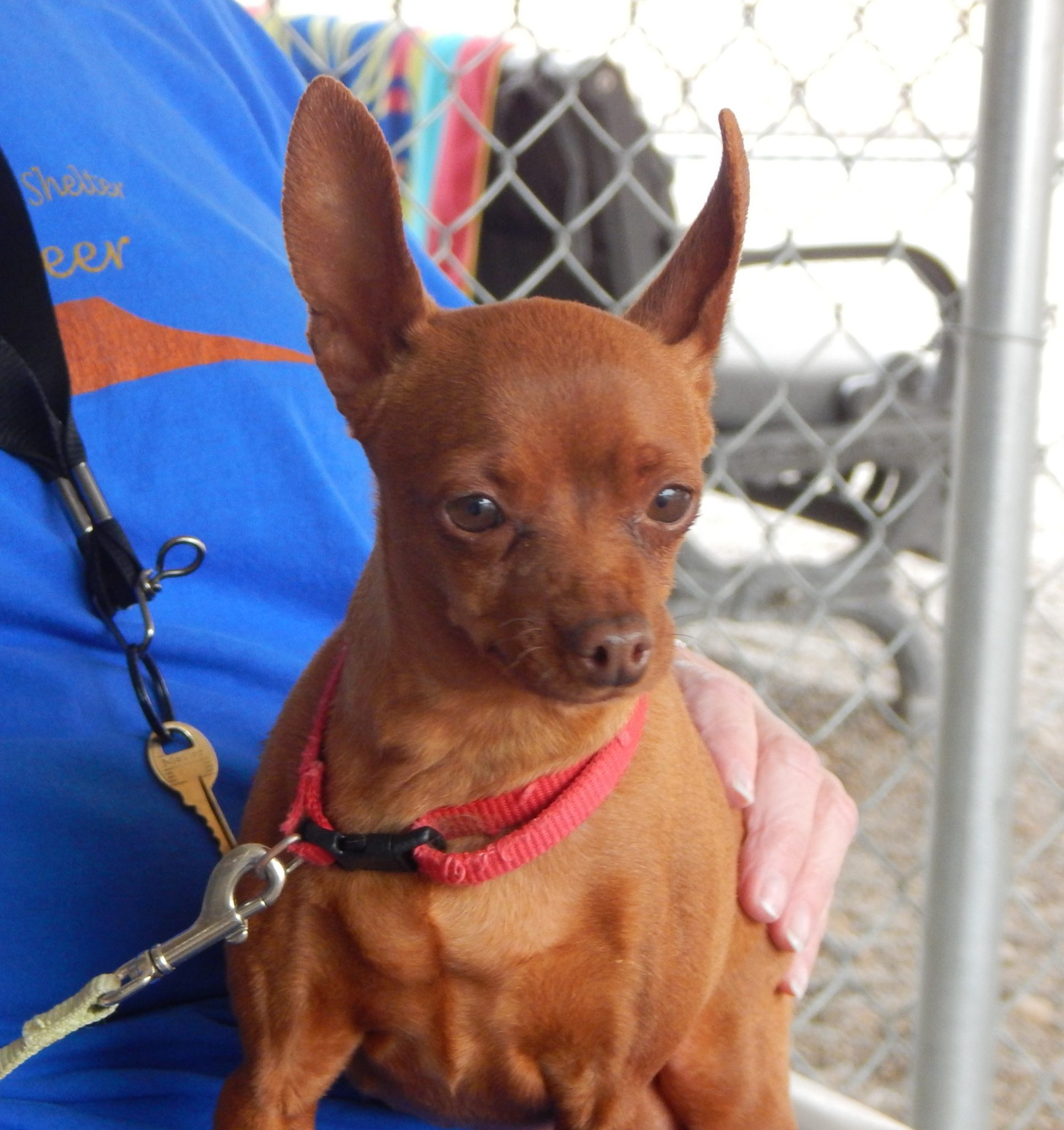 Mesquite Animal Shelter Pet Listing May 4, 2018