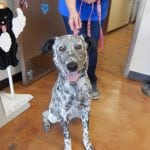 Mesquite Animal shelter Pet Listing May 25, 2018