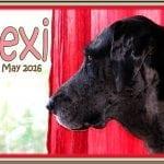 """Alexandra """"Lexi"""" Nehrenz-Obituary"""