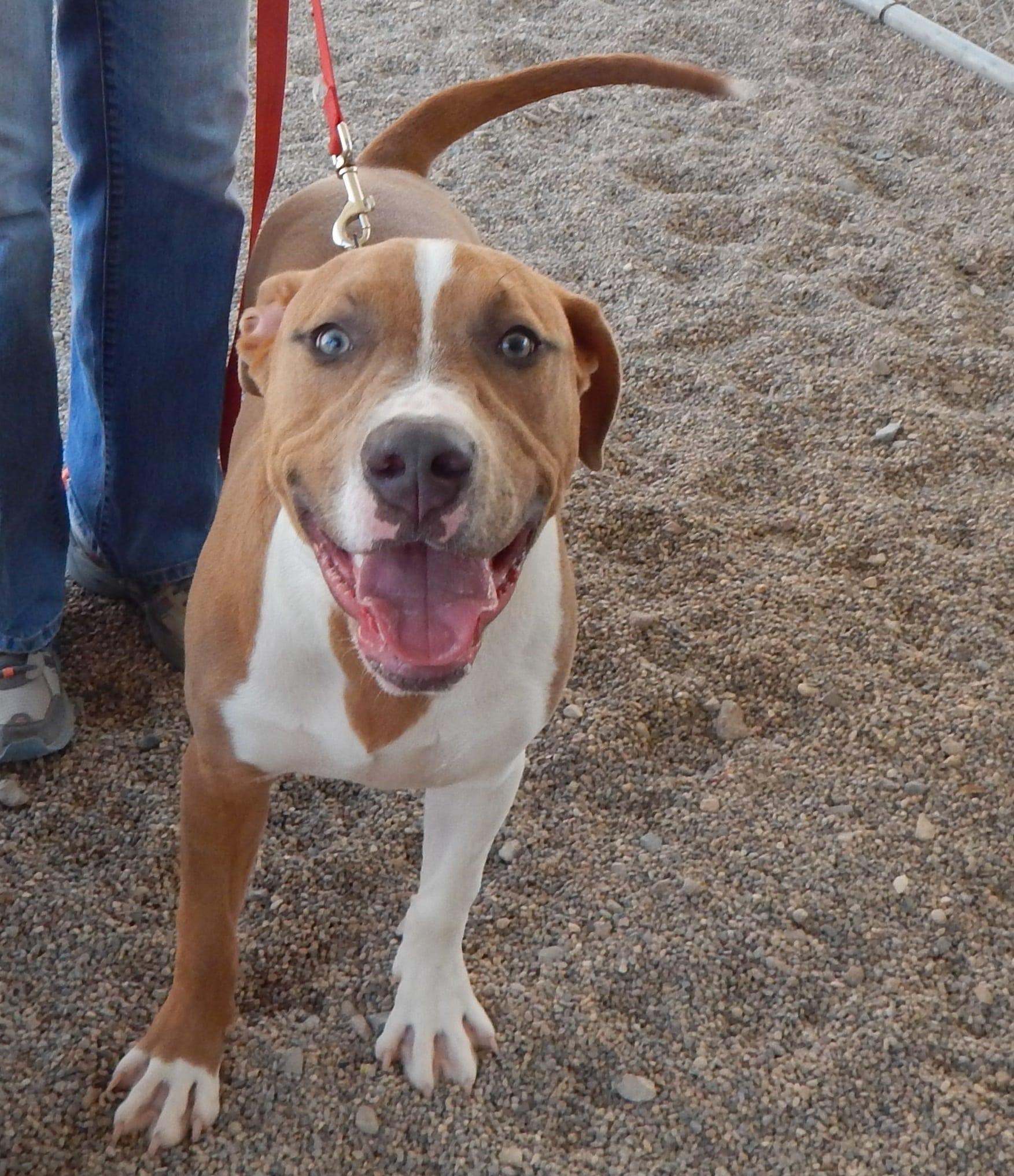 Mesquite Animal Shelter Pet Listing August 17, 2018