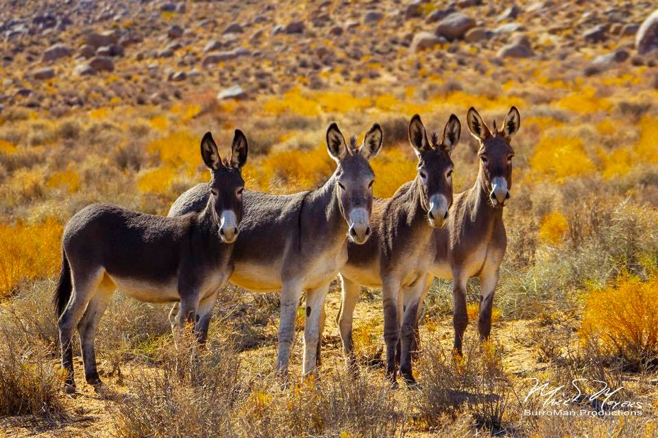 Five Fun Things to do in Nevada