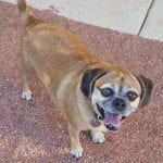 We Care for Animals Featured Pet