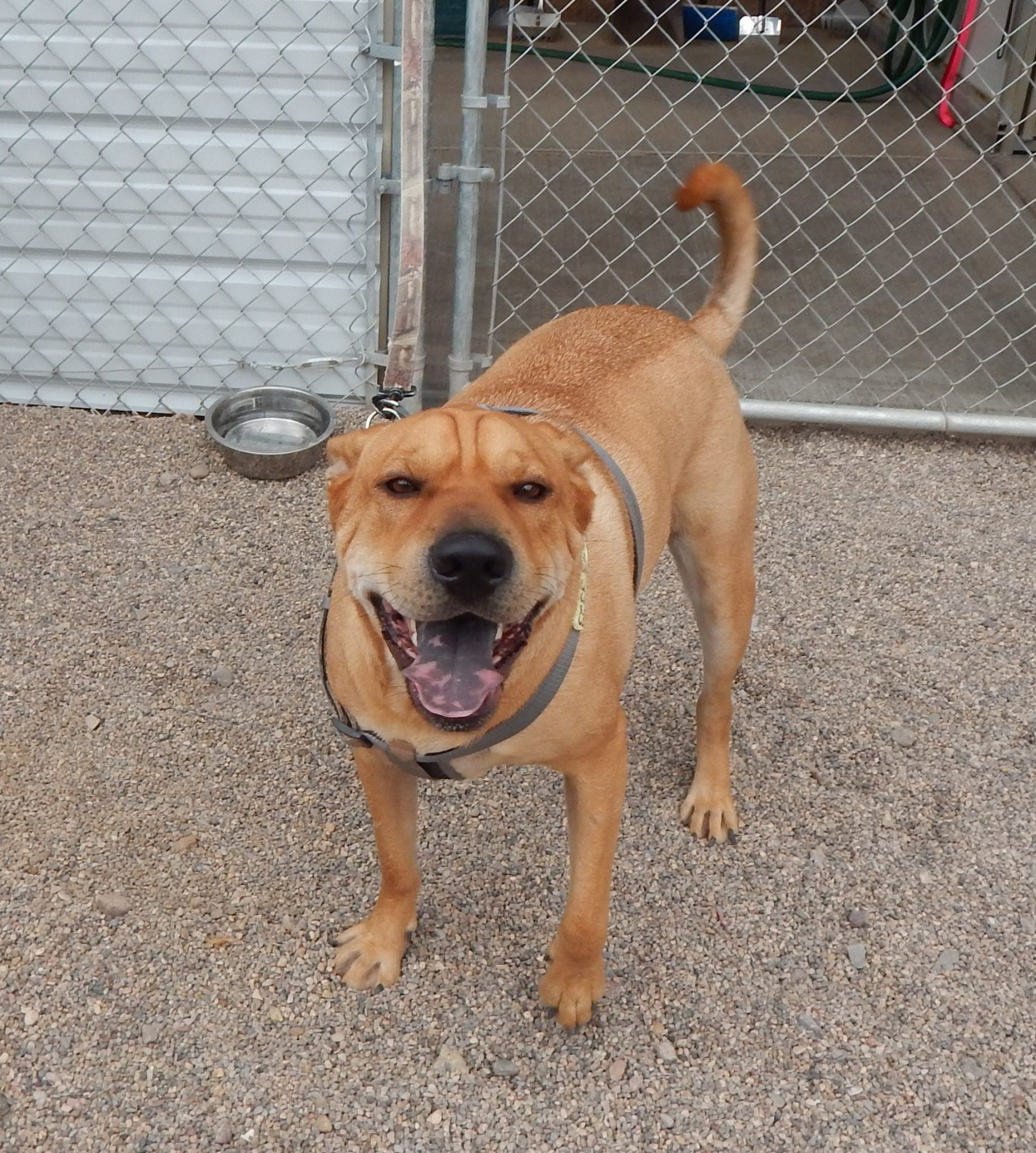 Mesquite Animal Shelter Pet Listing October 12, 2018