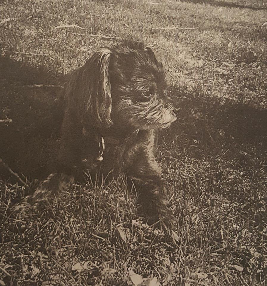 Lost dog in Beaver Dam