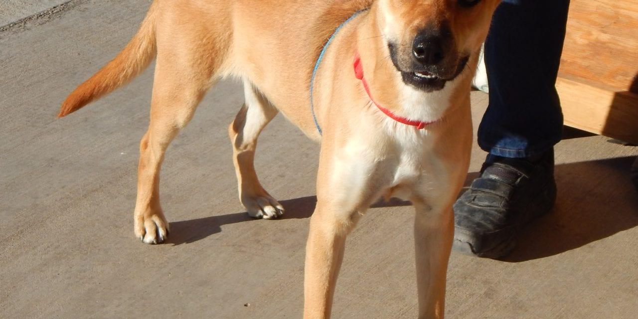 Mesquite Animal Shelter Pet Listing January 4, 2019