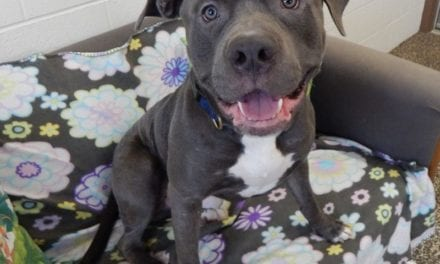 Mesquite Animal Shelter Pet Listing March 15, 2019
