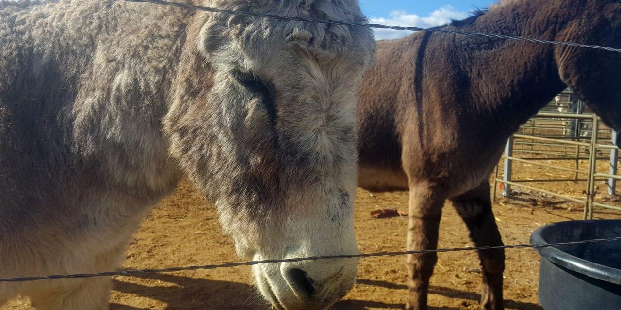 Sixth Annual Donkey Jamboree this weekend