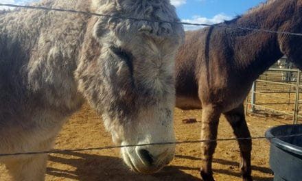 Sixth Annual Donkey Jamboree this weekend