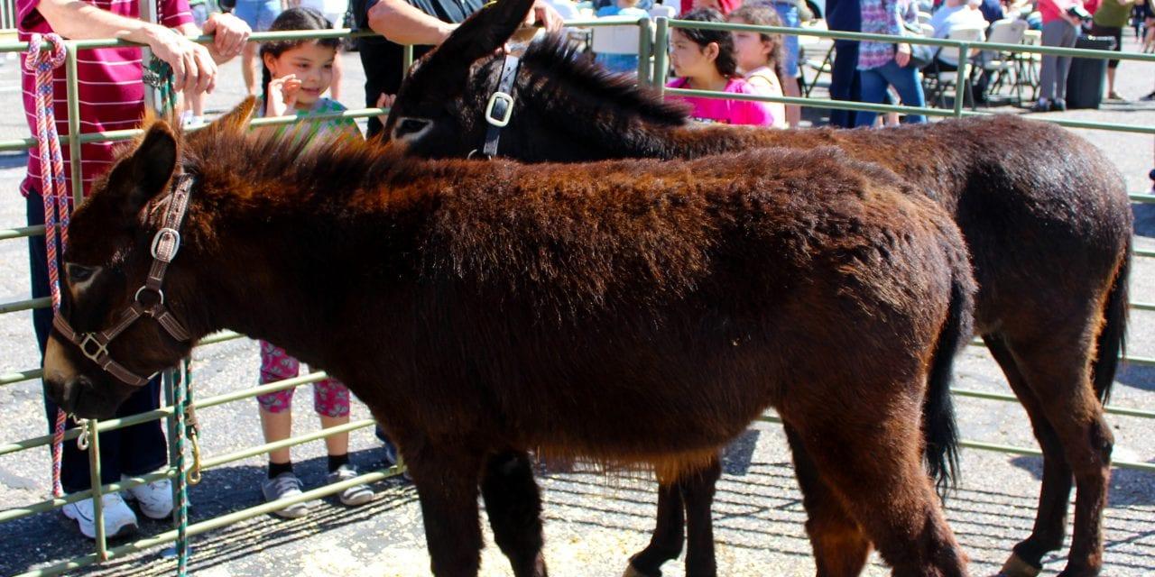Donkey Jamboree success
