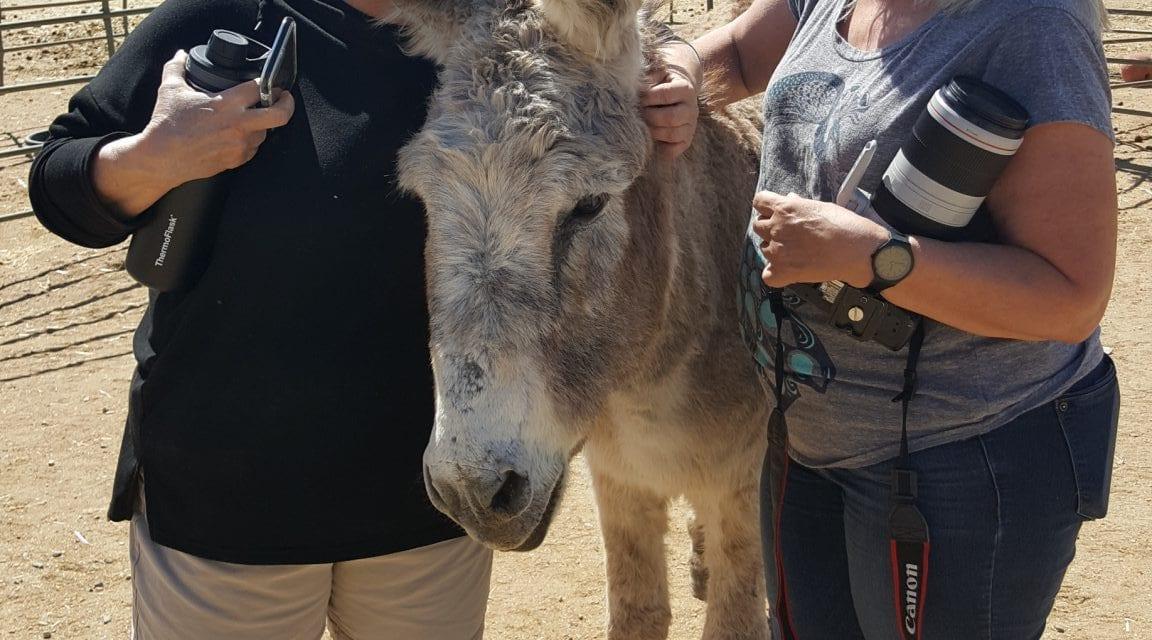 Senior donkey gets a dramatic new family