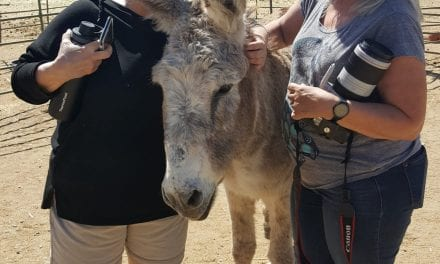 Senior donkey gets a dramatic new family