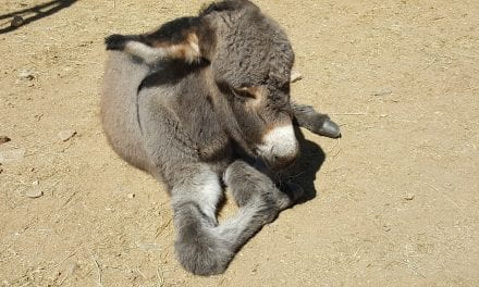 A vote for PVDR is a win for the Donkeys
