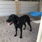 Mesquite Animal Shelter Pet Listing May 24
