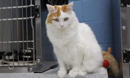 Mesquite Animal Shelter Pet Listing June 7, 2019