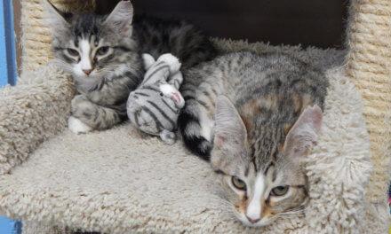 Mesquite Animal Shelter Pet Listing June 28, 2019