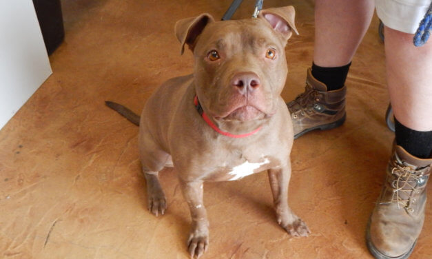 Mesquite Animal Shelter Featured Pet