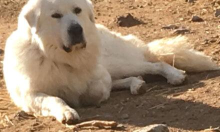 HELP US BUILD A NEW DOG PARK!