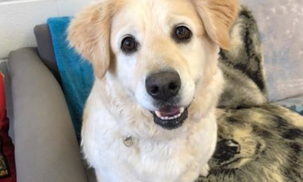 Mesquite Animal Shelter Pet Listing August 16, 2019