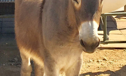 Local Casino Fosters Baby Donkey