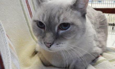 Mesquite Animal Shelter Pet Listing October 11, 2019