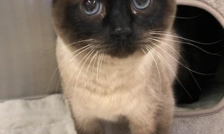 Mesquite Animal Shelter Pet Listing October 25, 2019