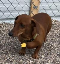 Mesquite Animal Shelter Pet Listing October 18, 2019