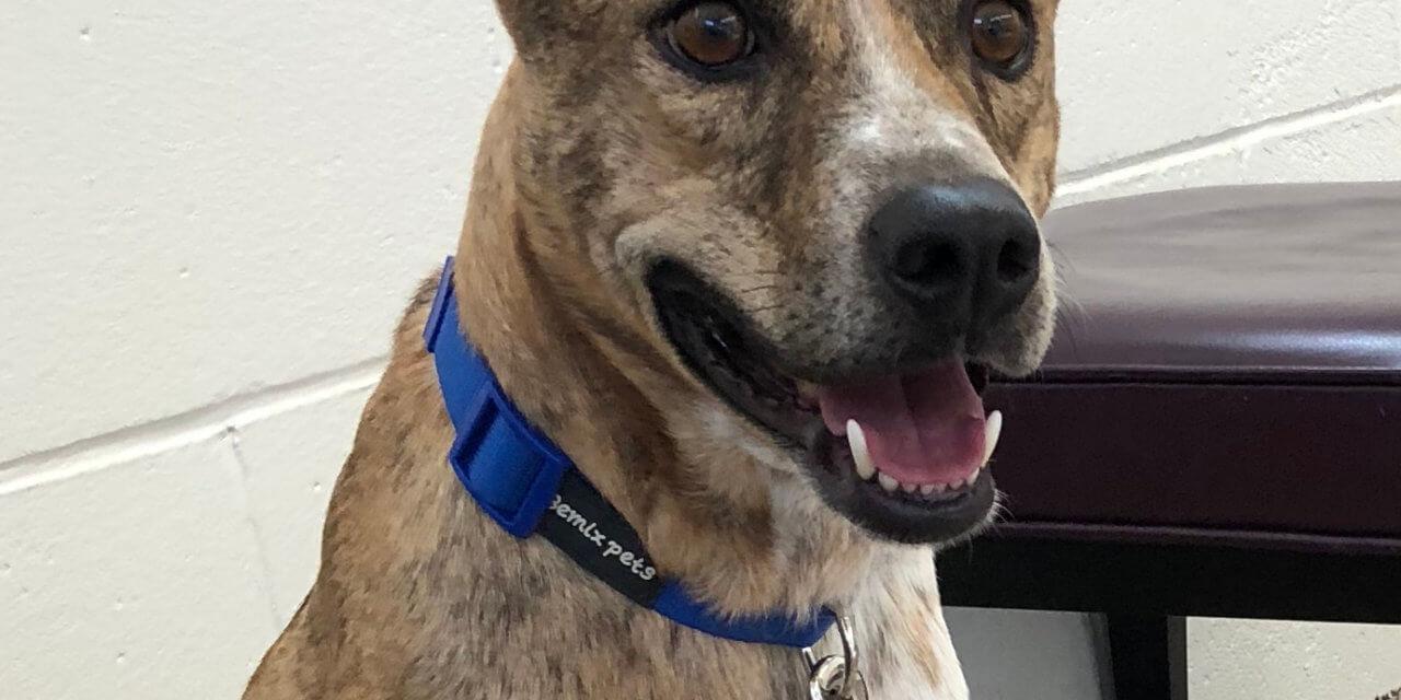Mesquite Animal Shelter Pet Listing Oct. 4, 2019