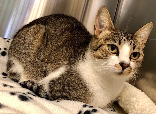Mesquite Animal Shelter Pet Listing November 22, 2019