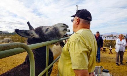 A very donkey Christmas