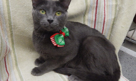 Mesquite Animal Shelter Pet Listing December 20, 2019