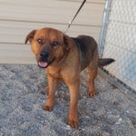 Mesquite Animal Shelter Pet Listing January 17, 2020