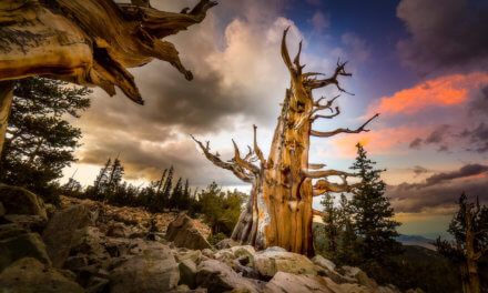 Traveling Exhibition: Home Means Nevada