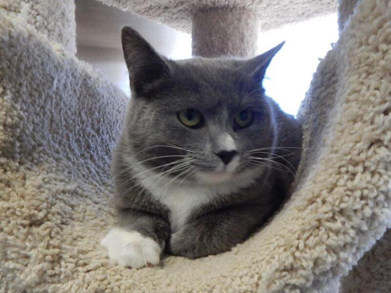 Mesquite Animal Shelter Pet Listing February 7, 2020