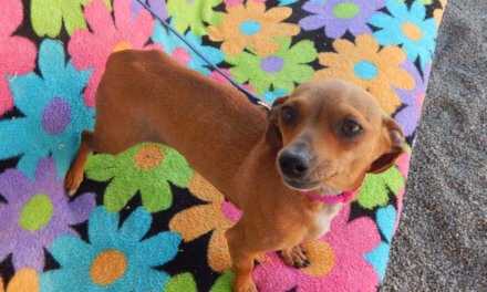 Mesquite Animal Shelter Pet Listing March 7, 2020