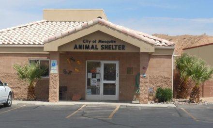 Mesquite Animal Shelter Pets for adoption