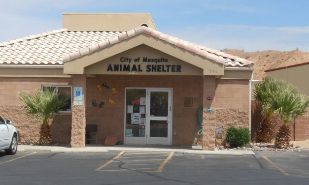 Friends of Mesquite Animal Shelter Adoptable Pets